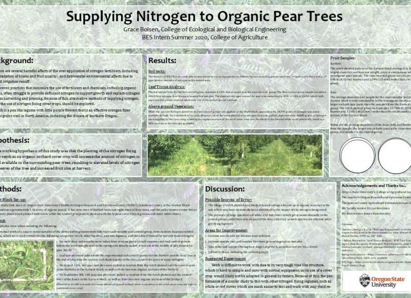 Grace Boisen: Supplying Nitrogen to Organic Pear Trees