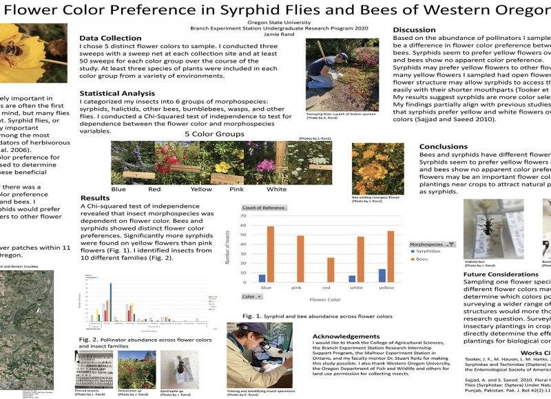 Jaime Rand: Flower Color Preference in Syrphid Flies and Bees of Western Oregon