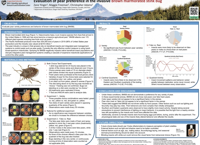 Zane Yinger: Evaluation of Pear Preference in the Invasive Brown Marmorated Stink Bug