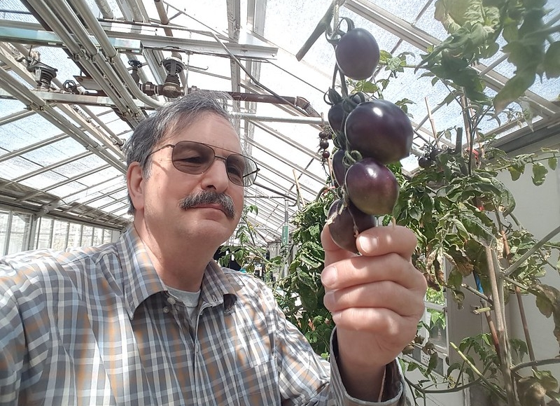 Jim Myers with Midnight Roma purple tomato. Photo by Jim Myers.