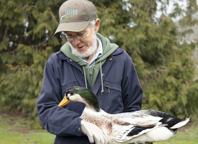 Dave Holderread hods a Silver Appleyard Duck