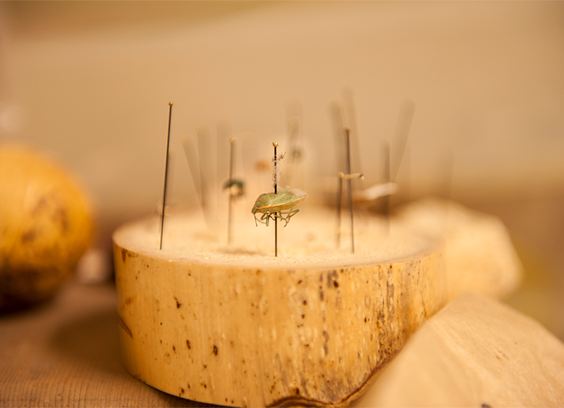insect display