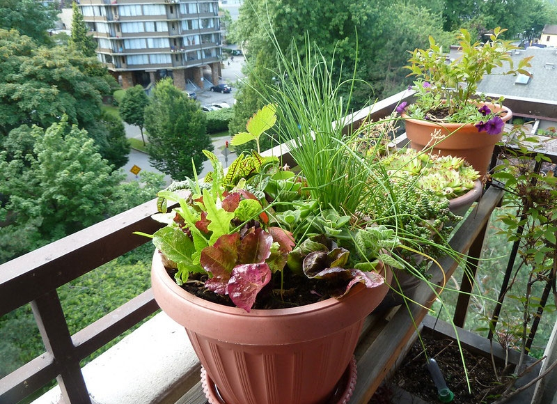 It's possible to have a vegetable garden in pots. Photo from Flickr by Wendy Cutler