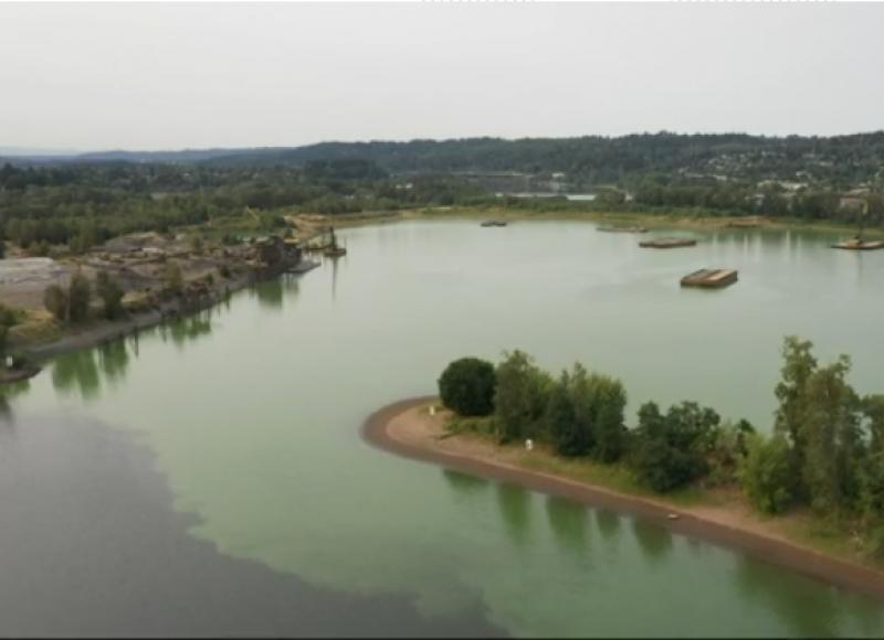 Toxic algae in Willamette River