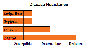 ORCF 102 - Soft White Winter Wheat - Disease Resistance