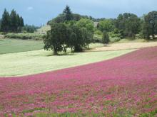 Fields in bloom