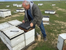 Bret Adee, a third-generation beekeeper who owns one of the largest beekeeping companies in the U.S. He pops the lid on one of the hives to show off the colony inside.