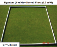 2007 Evaluation of Fungicides and Fungicide Programs for the  Control of Anthrac