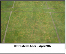 Untreated Check - April 9th