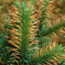 Plant disorders