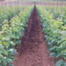 Soil/media