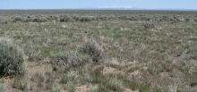 Plot to study sagebrush