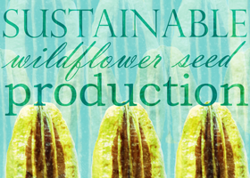 Sustainable Wildflower Seed Production